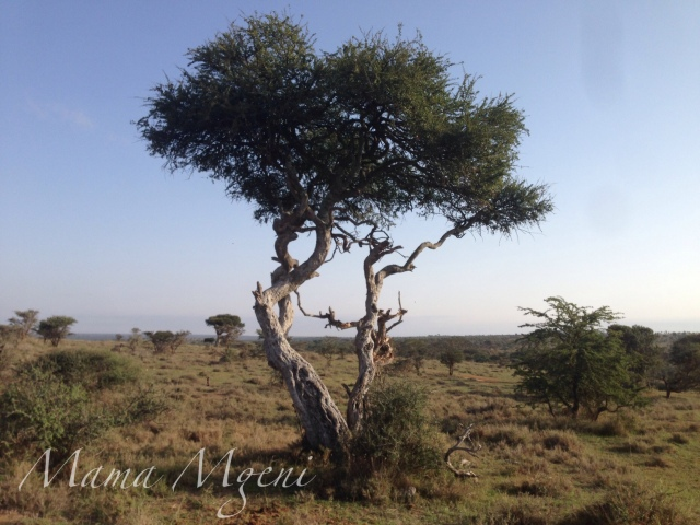 Watermarked Photo Laikipia 09